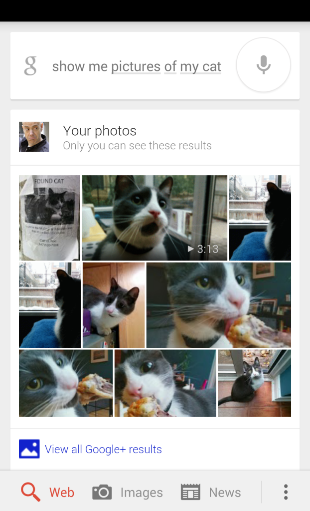 Cat Photos on Google+